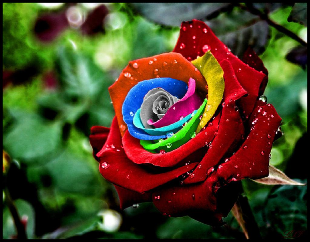 Цветы необычные